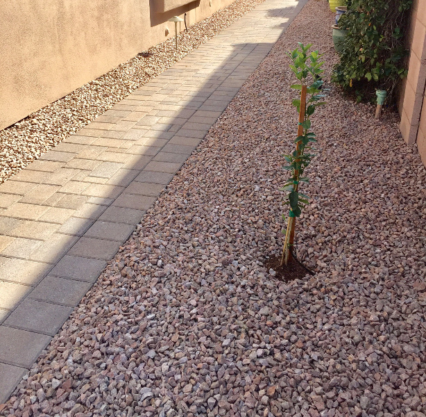landscapers-phoenix-arizona-5